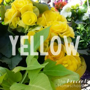 """Learning about colors?! Participate in a simple, yet fun """"Color Hunt"""" at your local garden centre!   Find more over at The Prudent Homeschooler"""