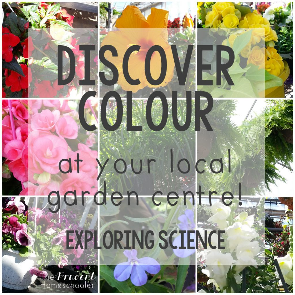 "Learning about colors?! Participate in a simple, yet fun ""Color Hunt"" at your local garden centre! 