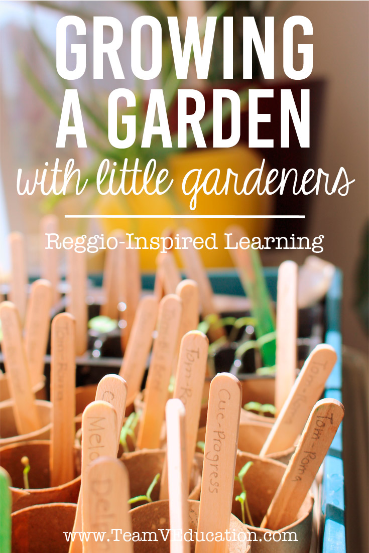 Growing a Garden with little gardeners. Embracing the Reggio Emilia Approach to learning by engaging our children's interests - dirt! Check out how we grew these gorgeous plants for our kitchen garden.