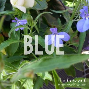 """Learning about colors?! Participate in a simple, yet fun """"Color Hunt"""" at your local garden centre! 